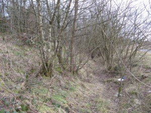 Dense woodland makes much of the Crown Avenue site inaccessible on foot or horseback
