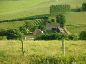 Breaky Bottom vineyard.  Access land is at the front of the picture.
