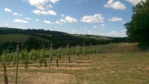 The view from the vineyard