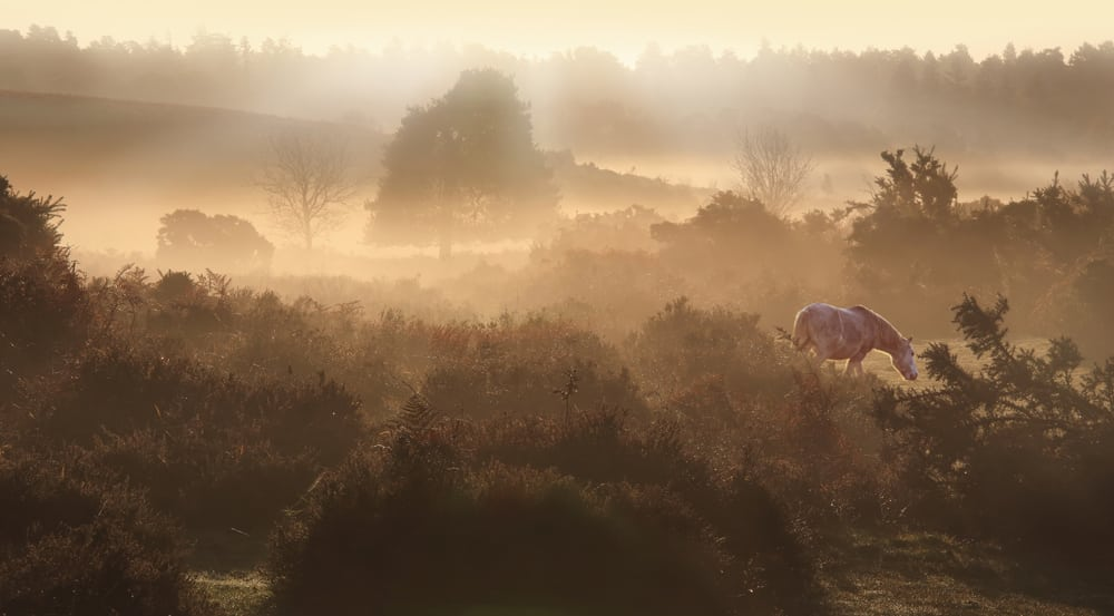 New Forest Dawn - New Forest moorlands near Burley Photo: Ceri Jones