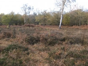 Deershelter Plain: here the area has been opened up and the invisible fencing enables it to be grazed to benefit low-growing plants.