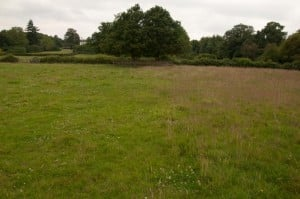 The line of the invisible fence is shown by the change in vegetation on The Warren