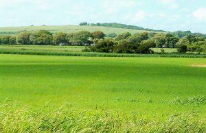 Green Belt Land