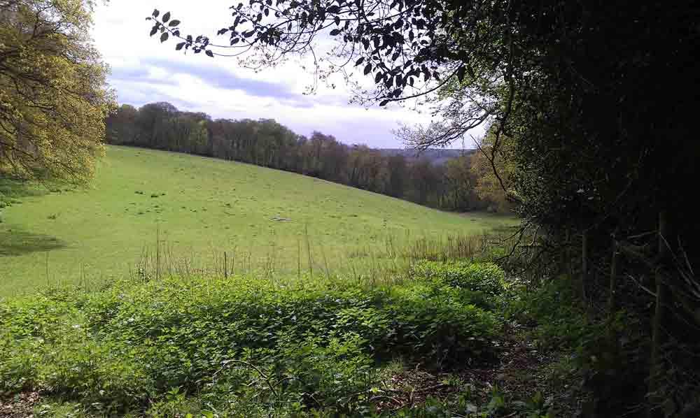 Ibstone Common, Buckinghamshire