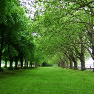green_spaces3