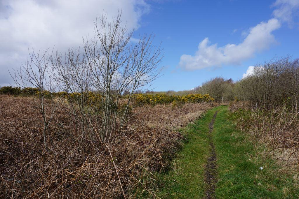 photo of Clyne Common showing the proposed release land to the left of the track © Copyright Bill Boaden and licensed for reuse under this Creative Commons Licence