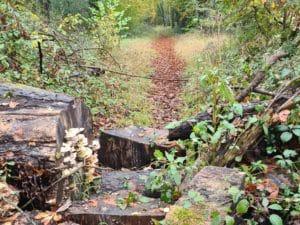 Path at Miskin, near Llantrisant, Rhondda Cynon Taf