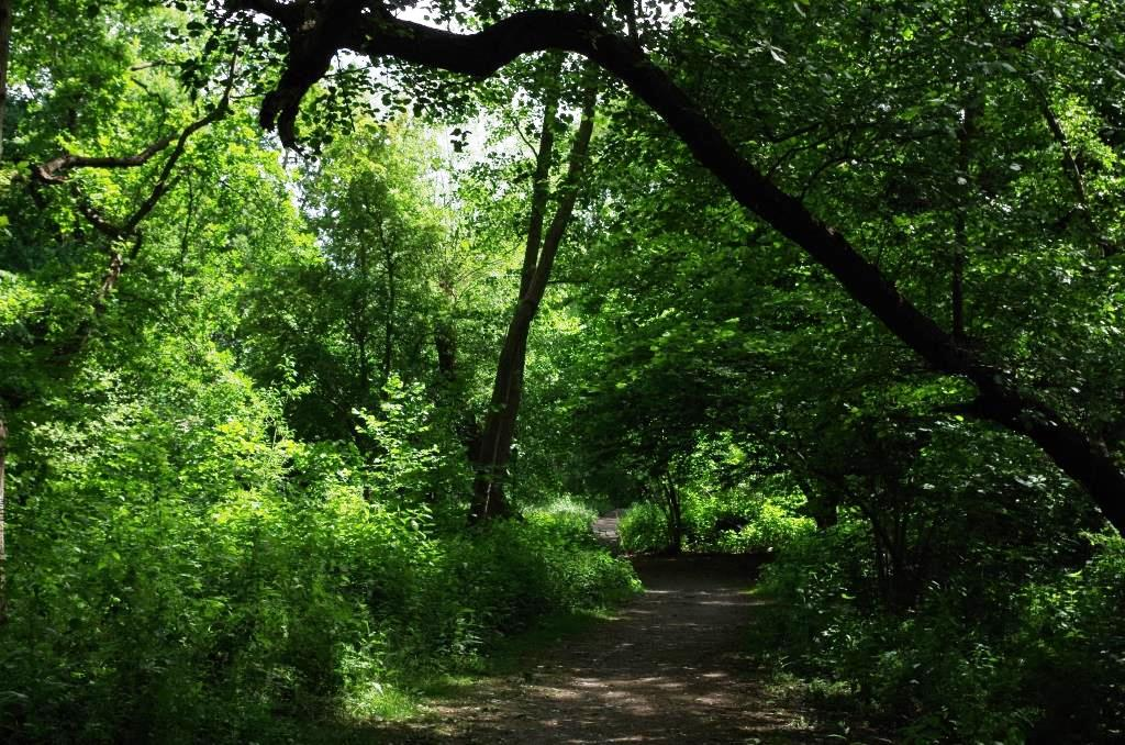 Brent River Park summer 2020